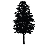 Tree Icon Footer